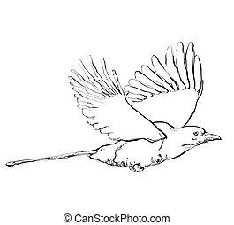 Krähe im Flug