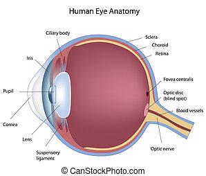 Kreuze Teile des menschlichen Auges, Eps8
