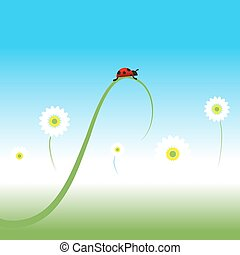 Ladybug, Frühlingsrollen