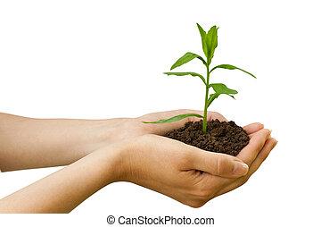 Landwirtschaft. Pflanz in einer Hand
