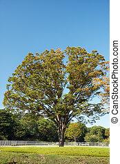 (lawn)., herbst, japan, honmaru, bäume, kaiserlich, tokyo., o-shibafu, garden., gefärbt, palast