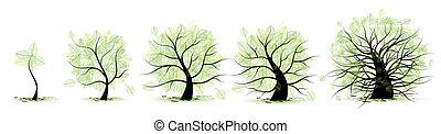 Lebensstadien des Baumes: Kindheit, Jugend, Jugend, Erwachsenenalter.