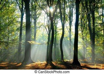 Lichtstrahlen strömen durch die Bäume