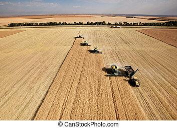 Luftaufnahme der Ernte.