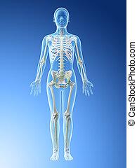 lymphatisches system