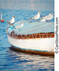 Möwen stehen auf einem kleinen Holzboot.
