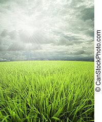 Meadow, Himmeldan Sonnenlicht