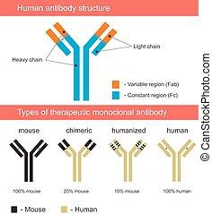 Menschliche Antikörperstruktur illustrati.