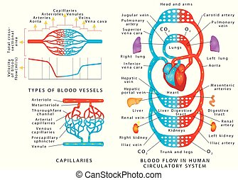 Menschliches Blut