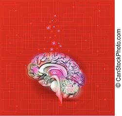 Menschliches Gehirn abstrakter Hintergrund.