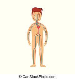 Menschliches Herz-Kreislauf-System - schematische Darstellung von Herz- und Blutgefäßen im männlichen Körper.