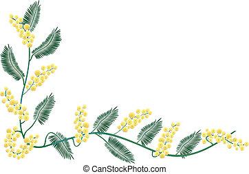 mimose, umrandungen