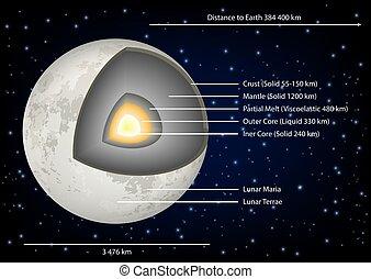 Mondstrukturdiagramm Vektorgrafik