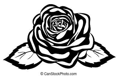 nahaufnahme, abstrakt, rose., freigestellt, schwarzer hintergrund, weißes