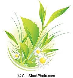 Naturpflanzen und Kamille