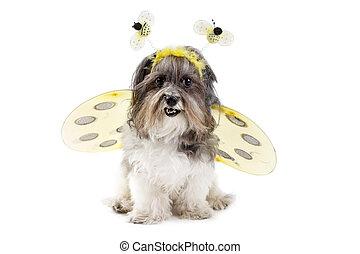 Netter Hund in einem Bienenkostüm