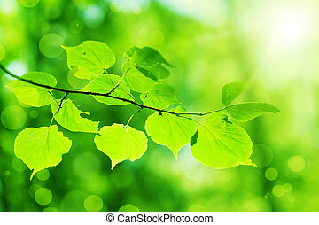 Neue grüne Blätter