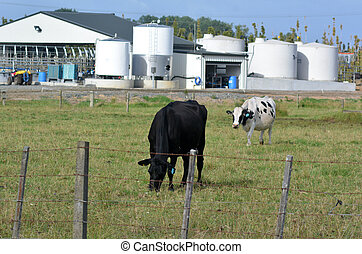 Neue Zealand-Milchindustrie
