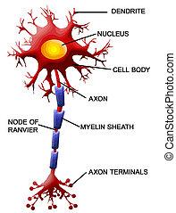 Neuronzelle