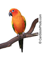 Niedriger Eis-Papagei, der auf einem Waldrand sitzt