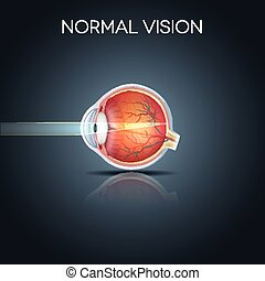 Normales Auge.