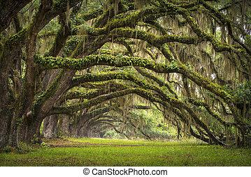 Oaks Avenue Charleston SC-Plantage live aus Eichenbäumen, Waldlandschaft im Talbecken, Südkarolina