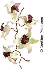 Orchideenzweig 1