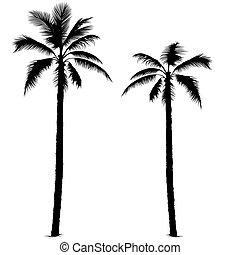 Palmbaum Silhouette 1