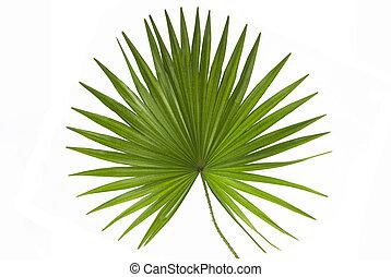 Palmblatt.