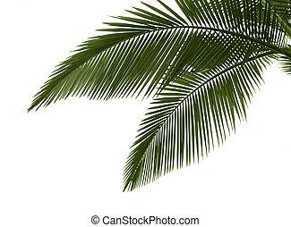 Palmen auf weißem Hintergrund