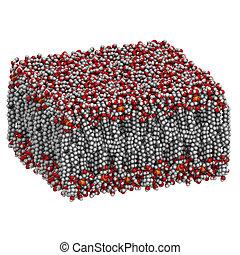 palmitoyloleoylphosphatidylcholine, molecul, (popc), bilayer, lipid