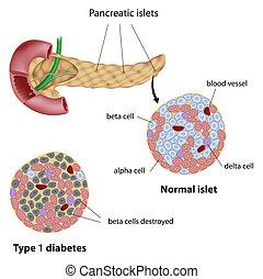 Pankreas-Islet in Diabetes, Eps8