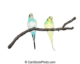 Papageien auf einem Ast.