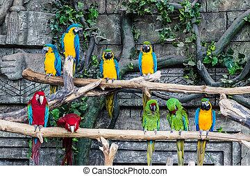 Papageien-Makaw sitzen auf einem Ast.