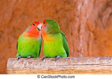 Papageienpaar auf einem Ast.