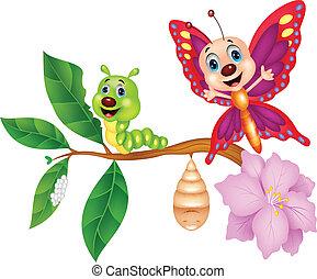 papillon, metamorphose, karikatur