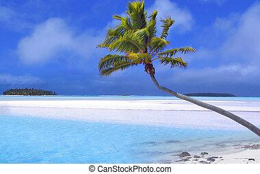 Paradise Palme