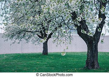 Park mit Kirschbäumen auf einem frischen grünen Rasen.