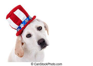 Patriotischer Hundehund.