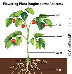 pflanze, zubehörteil