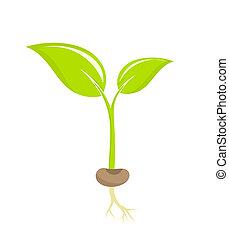 Pflanzenfutter