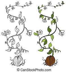 Pflanzer