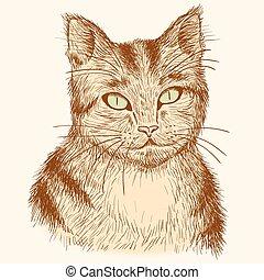 Portrait der handgezeichneten Reiterkatze.