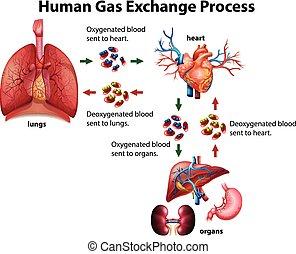 prozess, diagramm, gas, menschliche , tauschen