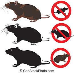 Ratte, Nagetier - Warnzeichen