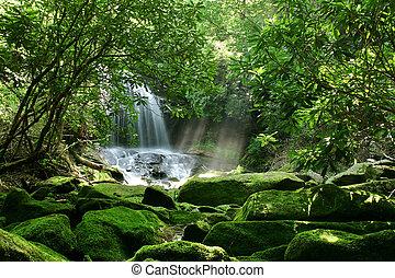 Regen des Waldwasserfalls