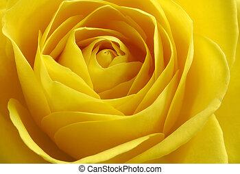 rose, gelber