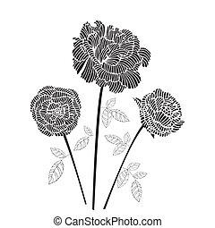 rose, schwarz, abbildung
