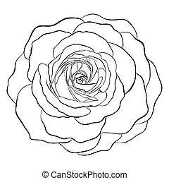 rose, weißes, schwarz, freigestellt