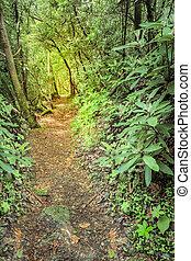 Rugged Trail